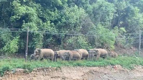 大象北上用出走给围观群众上了一堂科普课