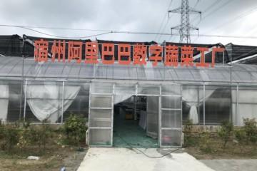 打造农业电商体系,宿州农业数字化转型发展